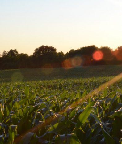 inovação no agronegócio