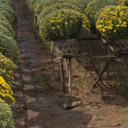Mercado de Agrotech cresce no Brasil